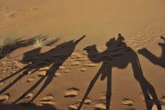 Sombras do camelo Imagem de Stock