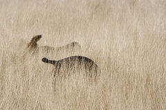 Sombras dos cães Fotografia de Stock