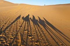 Sombras dos camelos sobre o ERG Chebbi em Marrocos Fotos de Stock Royalty Free