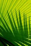 Sombras en la fronda de la palma Foto de archivo libre de regalías