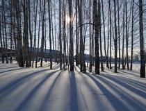 Sombras en la nieve Imagen de archivo