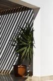 Sombras en la pared del patio Fotografía de archivo libre de regalías