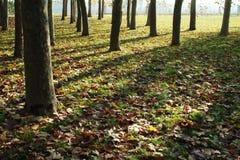 Sombras en las hojas de otoño Imagen de archivo libre de regalías