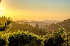 Sombras largas de una fila de árboles en un valle verde en el crepúsculo Imágenes de archivo libres de regalías
