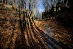 Sombras largas del bosque Fotografía de archivo libre de regalías