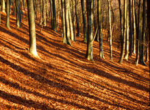 Sombras listradas da floresta do outono Imagens de Stock