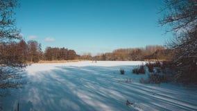 Sombras longas em Forest Clearing nevado em Sunny Day fotografia de stock royalty free