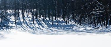 Sombras longas na madeira fotografia de stock