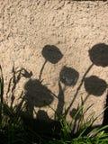 Sombras na parede Imagem de Stock Royalty Free