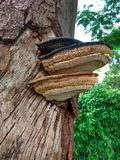 sombras raras del múltiplo del árbol de las maneras del lado del tiro foto de archivo libre de regalías
