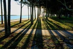 Sombras a través de árboles Fotografía de archivo