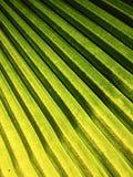Sombrea efectos luminosos de la palma de las hojas Imagen de archivo libre de regalías
