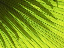 Sombrea efectos luminosos de la palma de las hojas Fotos de archivo
