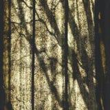 Sombrea la abstracción en el panel del policarbonato Imagenes de archivo