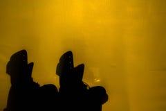 Sombree en la mirada más allá del fondo de las lonas Fotografía de archivo
