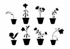 Sombreia potenciômetros de flor Imagem de Stock