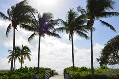 Sombrero Beach. Palm Trees Line Walkway between the park and sandy beach in Florida Keys Royalty Free Stock Photography