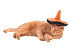 Sombrero cat. Cat is lying on the floor with sombrero on its head royalty free stock image