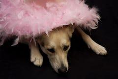 Sombrero cobarde en perro fotografía de archivo libre de regalías