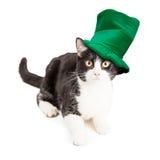 Sombrero de Cat Wearing St Patricks Day Foto de archivo