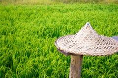 Sombrero de paja en el fondo fresco de Asia del viaje de la idea de la naturaleza del ambiente del verde del campo de trigo y del fotografía de archivo