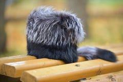 Sombrero de piel Fotos de archivo