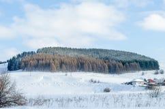 Sombrero del bosque de Ural imagenes de archivo