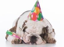 Sombrero del cumpleaños del perro que desgasta imágenes de archivo libres de regalías