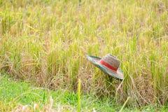 Sombrero del granjero en el campo del arroz Fotos de archivo libres de regalías