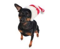 Sombrero en un perro Imagen de archivo