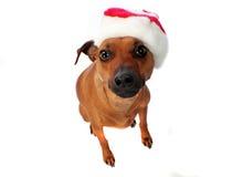 Sombrero en un perro Imágenes de archivo libres de regalías