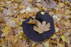 Sombrero femenino en el parque Fotografía de archivo libre de regalías