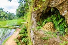 Sombrero hecho en casa de la palma en las terrazas del arroz de Tegalalang, bali9 Imágenes de archivo libres de regalías