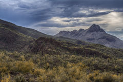 Sombrero Peak. Mountainous landscape of Saguaro National Park in Tucson, Arizona Royalty Free Stock Photo
