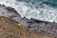 Sombrero perdido durante el clima tempestuoso en la costa costa rocosa de Oahu fotografía de archivo libre de regalías