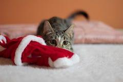Sombrero y Kitty de Chritsmas fotografía de archivo libre de regalías