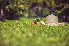 Sombrero y manzanas del ` s de las mujeres en la hierba Foto de archivo libre de regalías