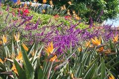 Sombrilla de madera en un jardín del centro turístico Foto de archivo libre de regalías