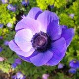 Sombrilla en la broche del bb q10 de la flor Fotografía de archivo