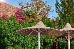 Sombrillas cubiertas con paja en verano imagen de archivo libre de regalías
