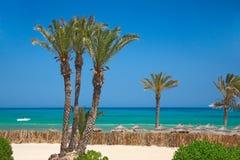 Sombrillas y palmeras cubiertas con paja foto de archivo libre de regalías