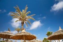Sombrillas y palmeras cubiertas con paja imagenes de archivo