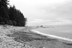 Sombrio Beach, BC. Shot taken of Sombrio beach on Vancouver Island, Bristish Columbia, Canada. A murky cloudy day this black and white shot of the forest and stock photography