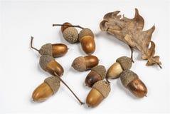 Acorns. Some acorns on a white table stock photos