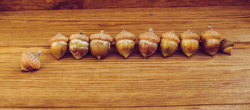 Some acorns on the wooden table. There are some acorns on the wooden table royalty free stock photo