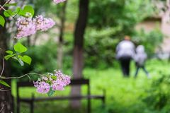 Well kept yard of the old residential house, filled with lush greenery. Moscow suburbs, Russia. Some active reents enjoy helping the municipal services to take Stock Image