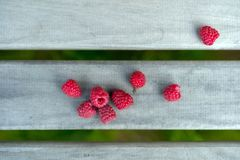 Some alone red raspberries. Are on the gray background royalty free stock photography