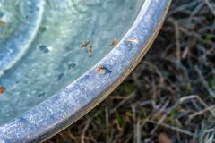 The ants walk on the edge of the tub. Some ants walking on the edge of the tub and lots of dead ants are in the tub royalty free stock photo
