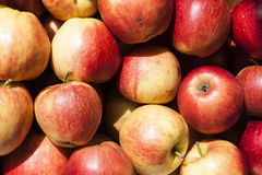 Some apple at street market. Image of Some apple at street market Stock Image