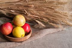 Some apples in wooden plate on a linen tablecloth with burlap and ears of wheat. Lit by the sun light royalty free stock photos